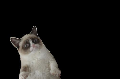 Transparent tumblr cat head sydney dont lose your
