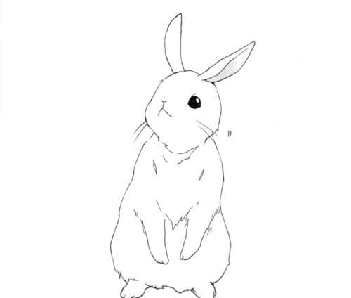 how to draw a anime bunny