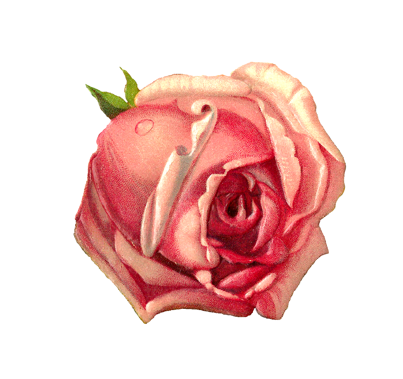 flowery branch muslim single women We extend a special welcome to those who are single, married  tuesday women's meeting @ 7 pm  5801 black jack road flowery branch, ga 30542.