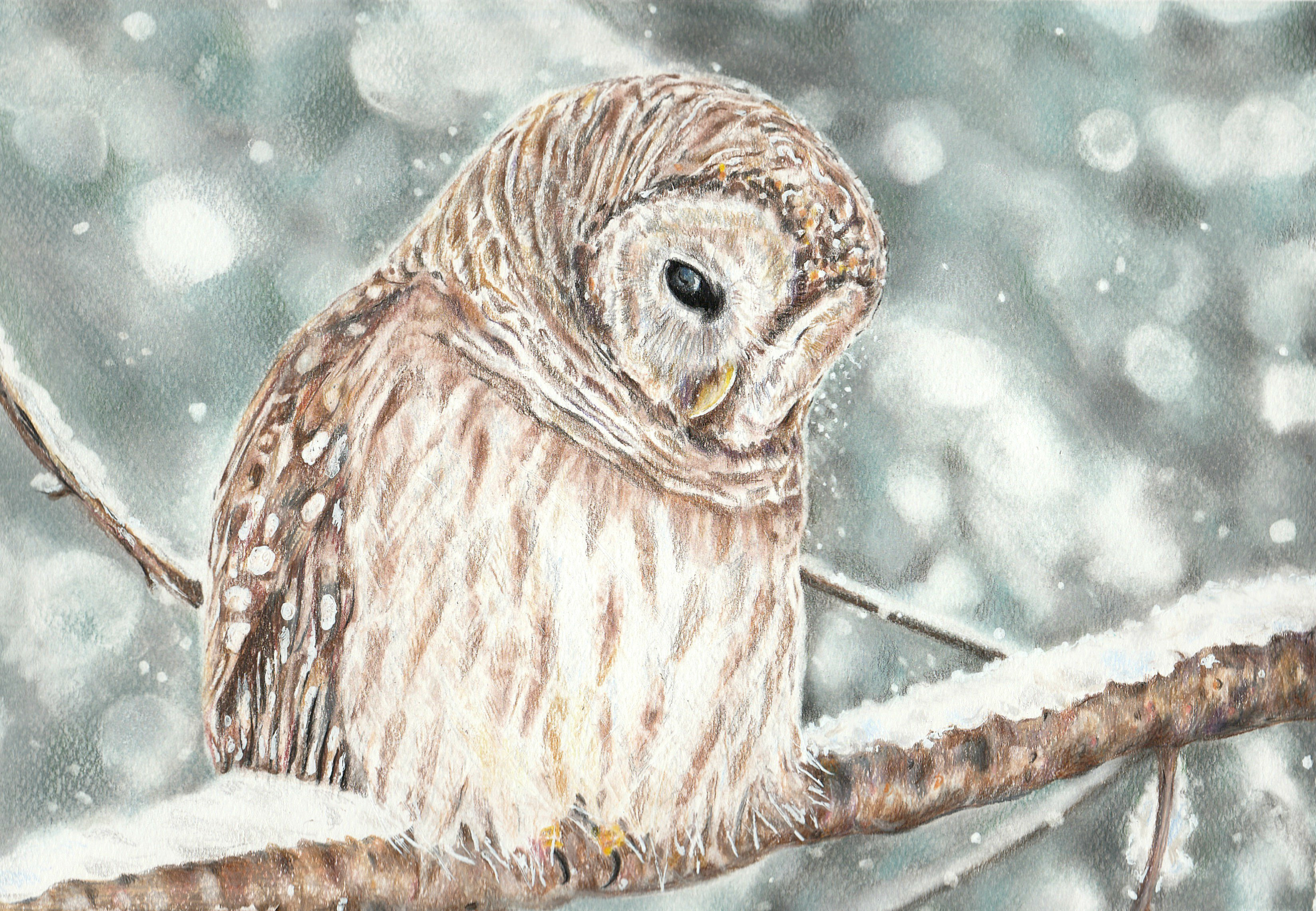 List Of Synonyms And Antonyms Of The Word Owl Drawings Tumblr