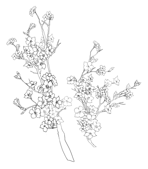 liebesbriefeschreiben Transparent Black And White Flowers Tumblr