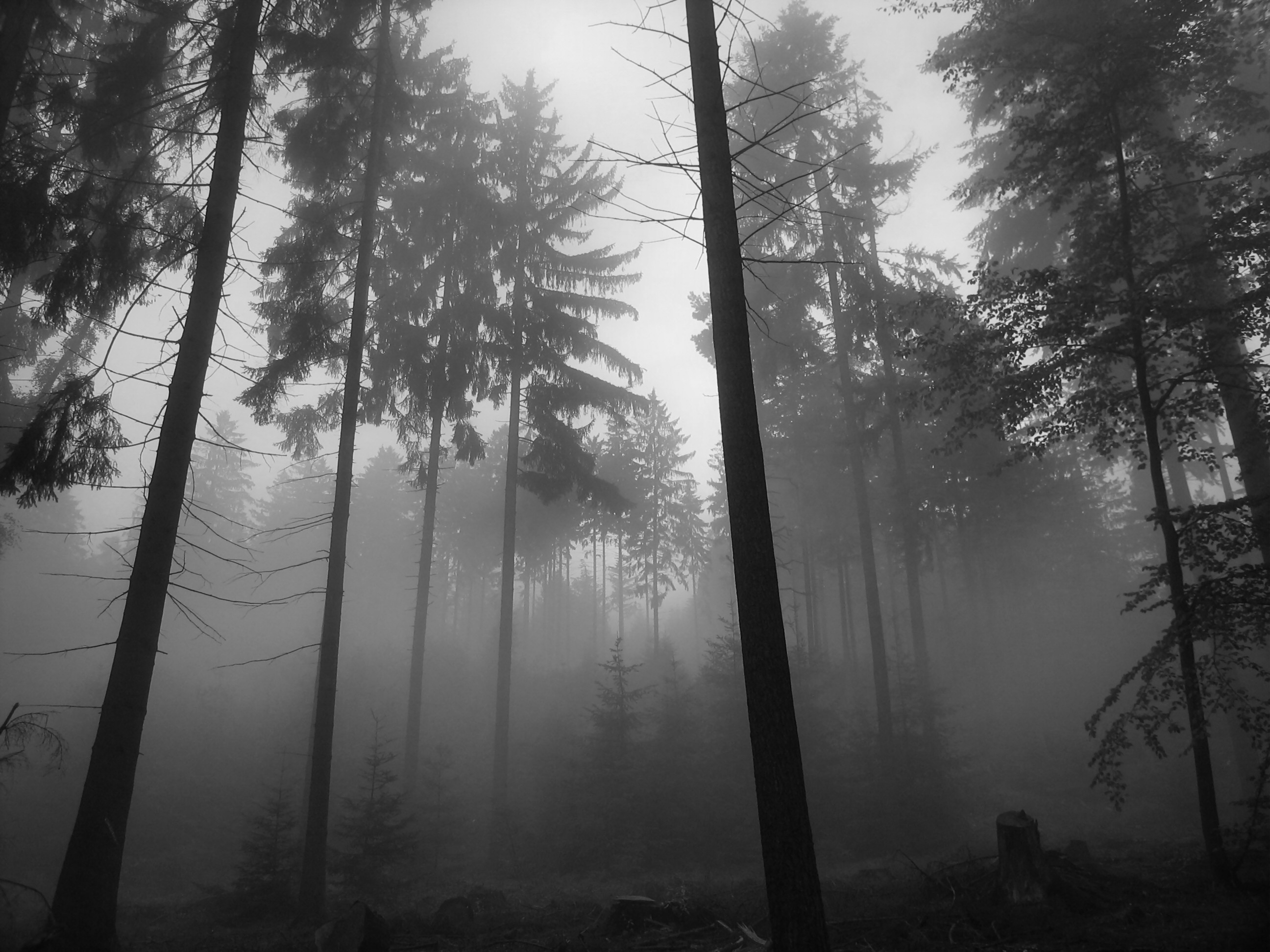 .silent grey