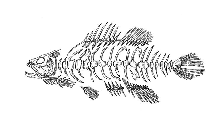 dj creelFish