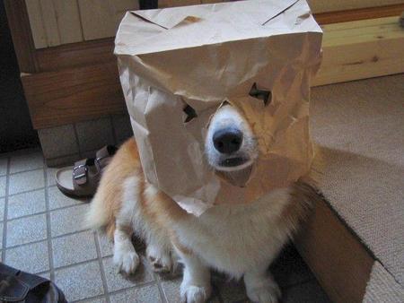 tumblr_static_dog-logo.jpg