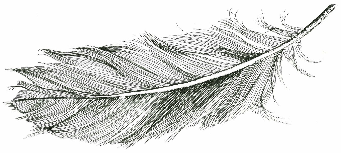 Feather Drawing Tumblr | www.pixshark.com - Images ...