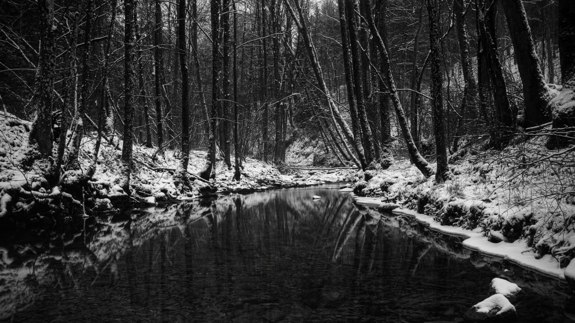 Amazing Wallpaper Horse Forest - tumblr_static_black-and-white-snow  Snapshot_36264.jpg