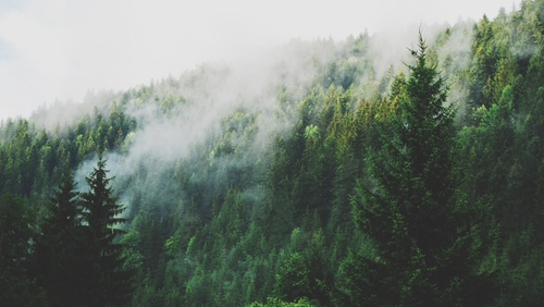 Image result for forest tumblr