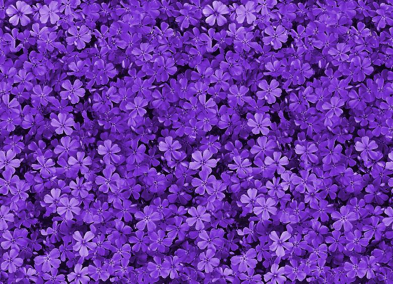 Un taller con mal olor [TALLER ABIERTO] - Página 2 Tumblr_static_pretty_field_of_purple_flowers