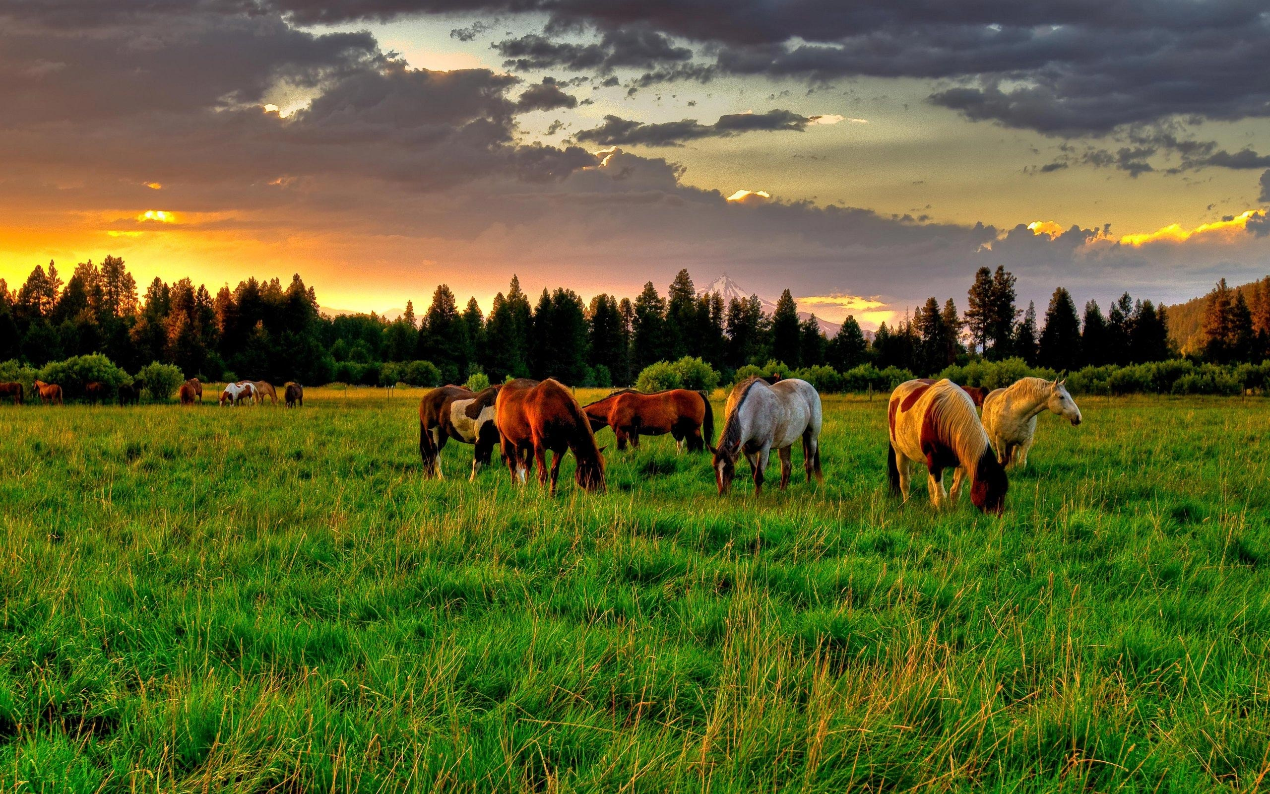 Must see Wallpaper Horse Spirit - tumblr_static_horses_on_field_hd_widescreen_wallpapers_2560x1600  Pictures_78924.jpg