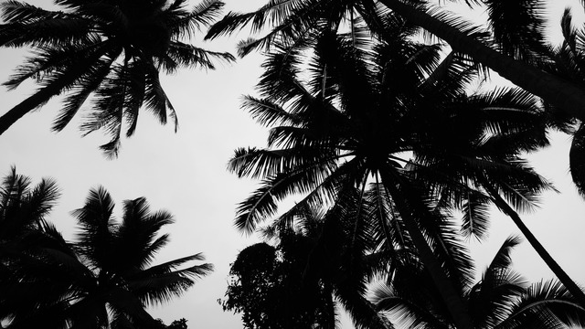 WE LOVE PALM TREES