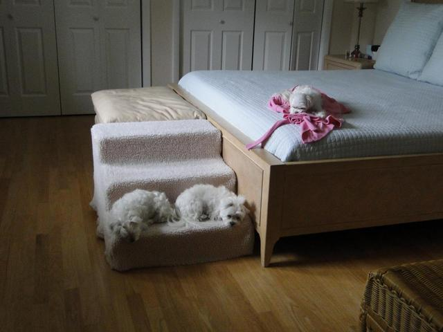 dog stairs for beds | tumblr