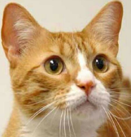 orange white cat tumblr