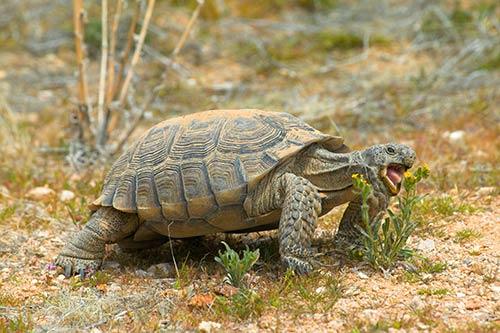 kaplumbağa tumblr ile ilgili görsel sonucu