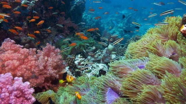 Snorkeling A Field Trip In The Ocean