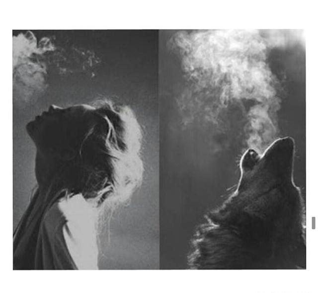 Famoso come un lupo | Tumblr YK43