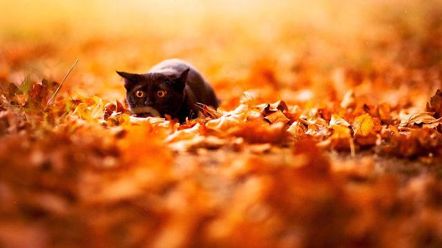 """Képtalálat a következőre: """"fall tumblr"""""""