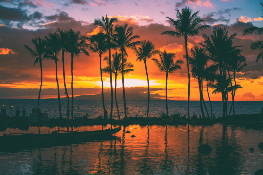 palm trees sunset tumblr. Palm Trees Sunset Tumblr Imgee