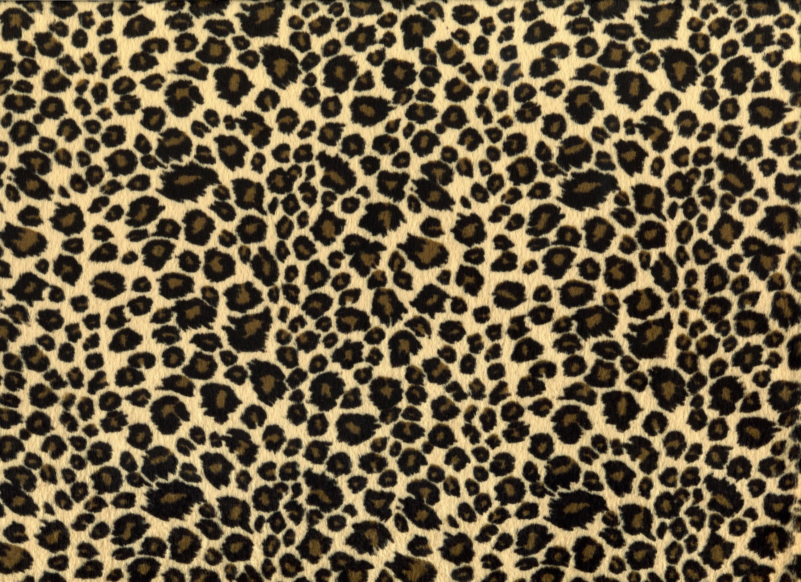 Leopard background tumblr for Leopard print wallpaper