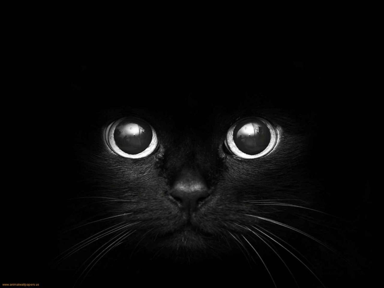 Black Cat Background Tumblr Ef s World