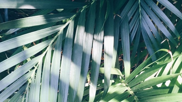 Imagini pentru tumblr palmtrees