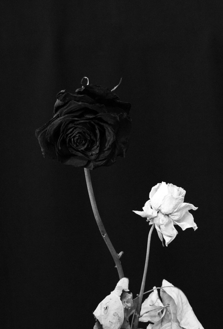 Roses tumblr black and white
