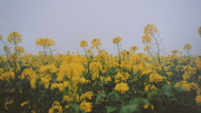 When the flowers grow tumblr when this is all over i want to sit grow flowers mightylinksfo