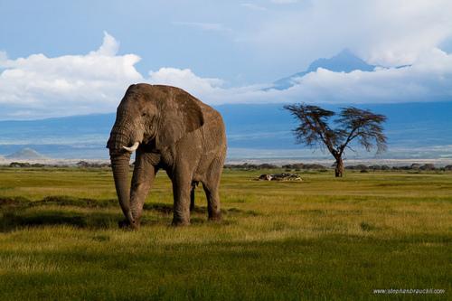 seite offener elefant
