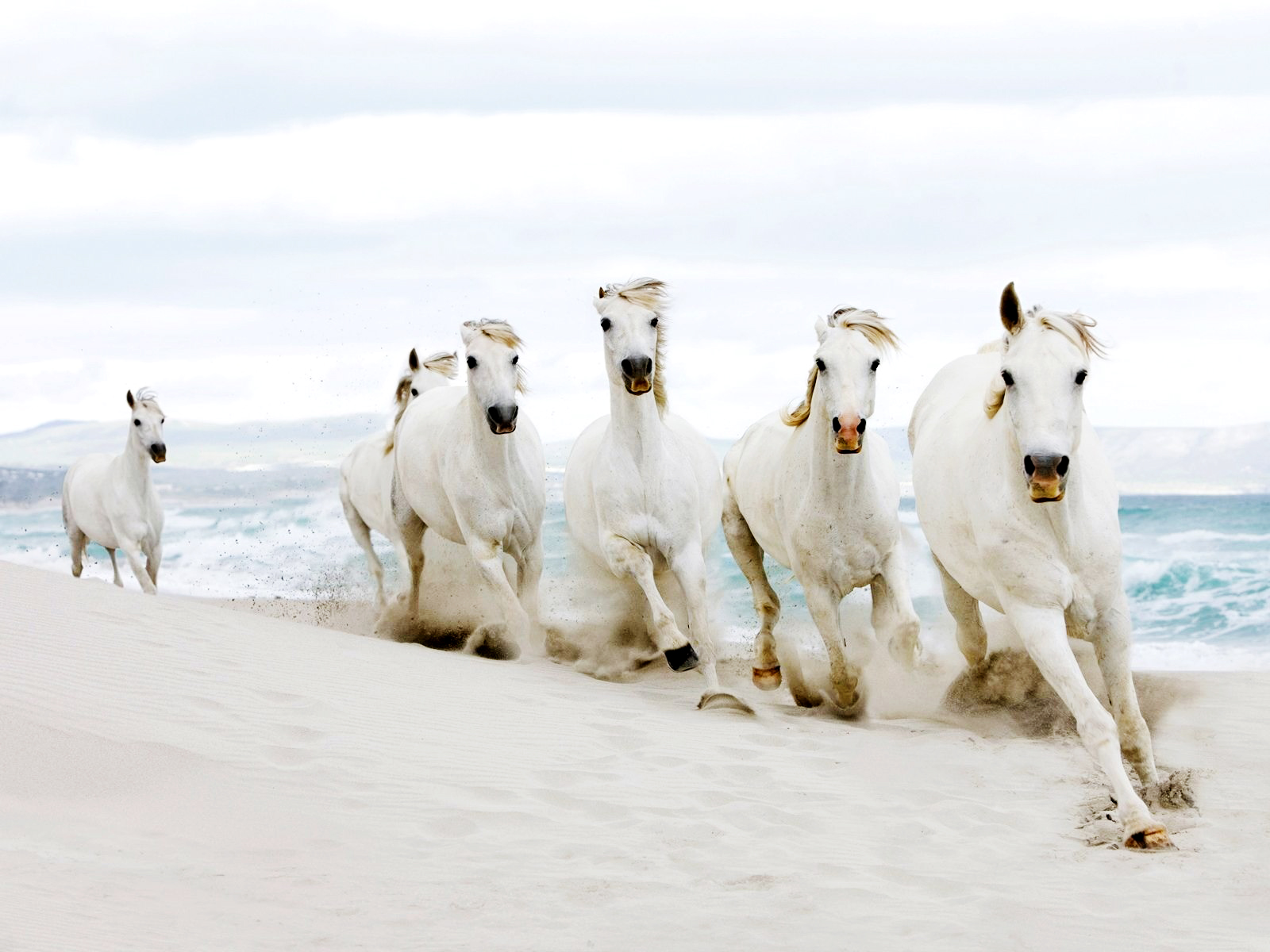 Popular Wallpaper Horse Country - tumblr_static_white_horses_running_on_beach_hd_wallpaper  Graphic_266869.jpg