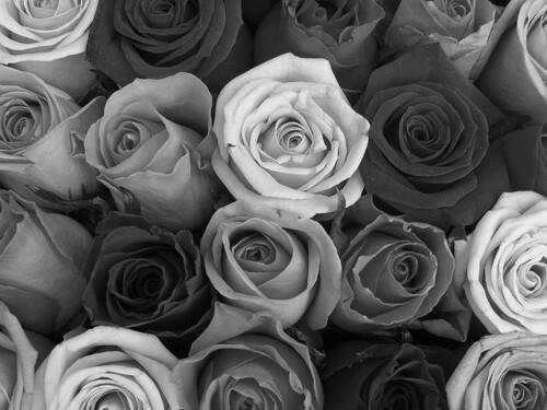 Black and white photograhy tumblr true love mightylinksfo