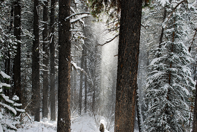 snow falling cedars In 'snow falling on cedars' there is a sub plot which revolves around the relationship of two islanders and this relationships represents the concepts of conflicting perspectives.
