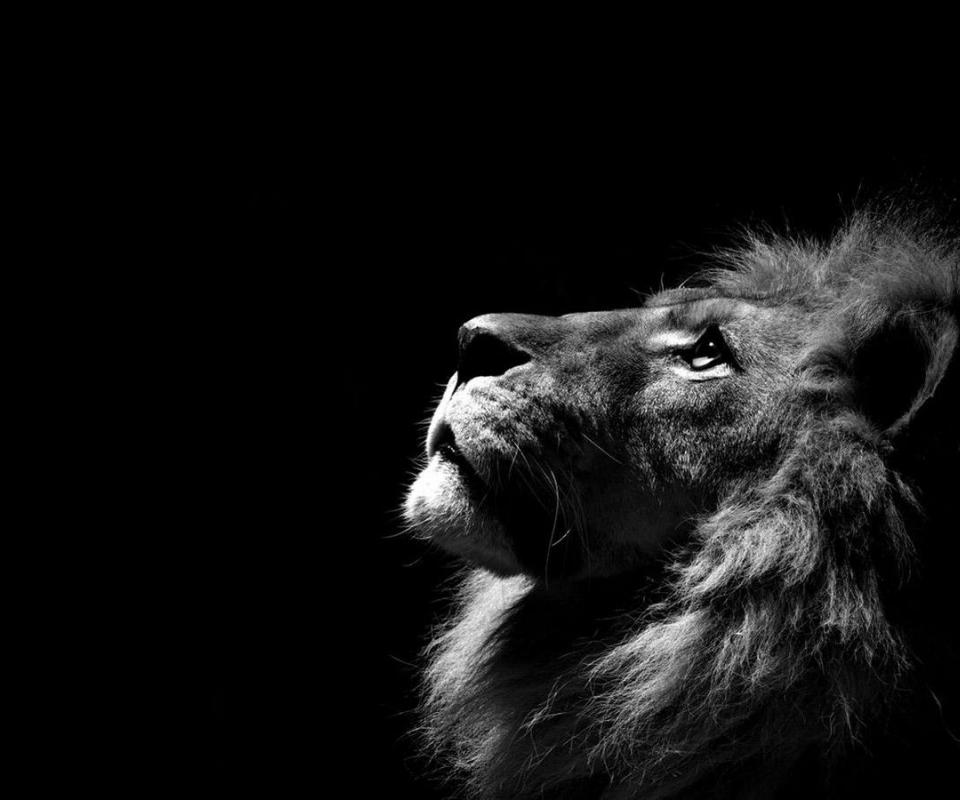 Tumblr Lion Background