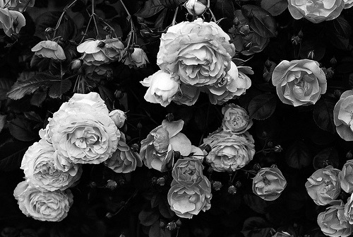 Black Flowers Background Tumblr