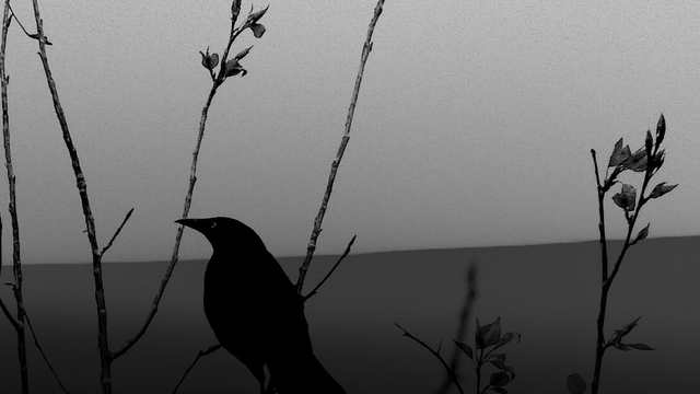 Nightingale Demi Lovato Tumblr