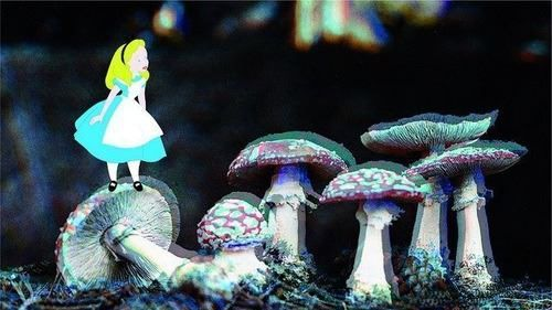 Tumblr alice in wonderland drugs