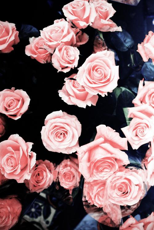 Pink flowers mightylinksfo
