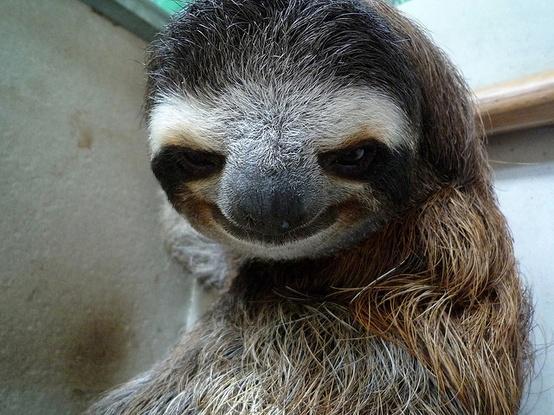 Sloth meme with girl