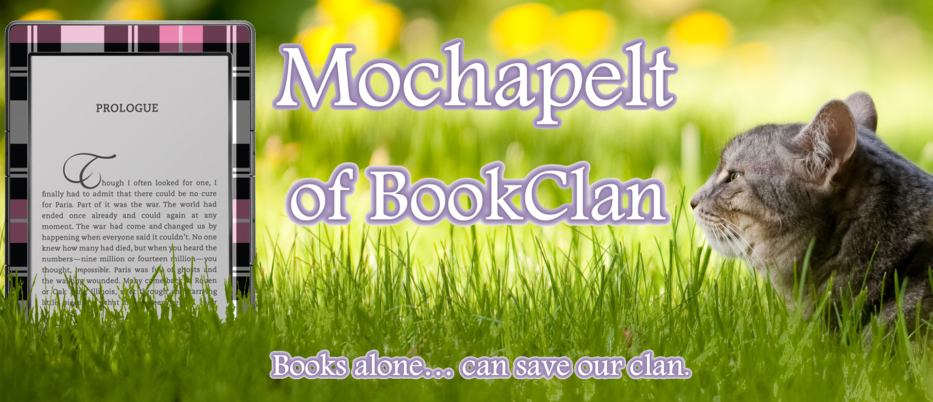Mochapelt of BookClan