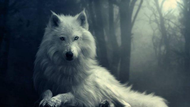 In the Shadow of the Wolf, Part Three Tumblr_static_tumblr_static_1iuhe2wbjav44s4gkwo4o4sc8_640