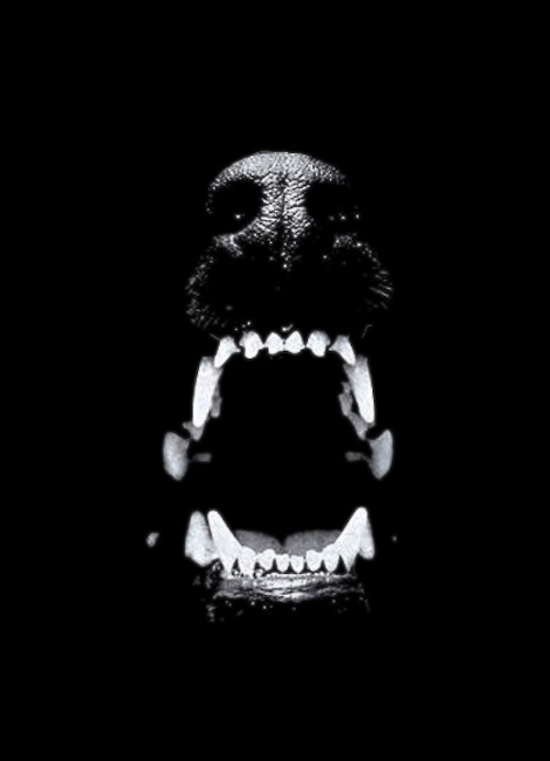 black dog barking Camiseta airbourne black dog barking, frente em malha poliéster com estampa  sem toque, costas e mangas em malha 100% algodão fio 301 preço: r$59,90.