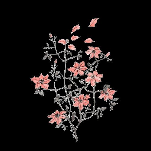 Tumblr Transparent Flower Drawing