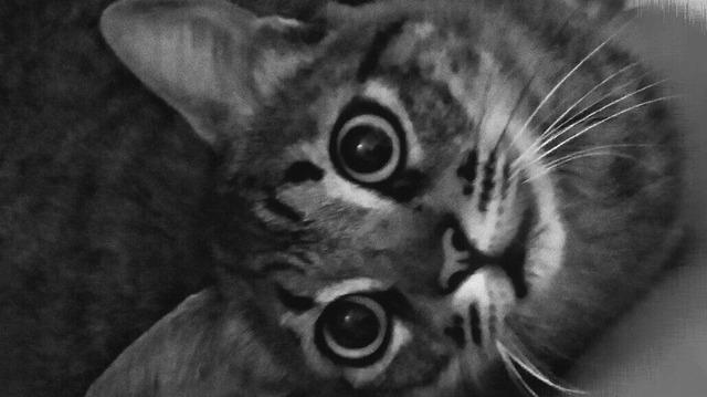 Resultado De Imagen Para Tumblr Gatos T Wallpaper