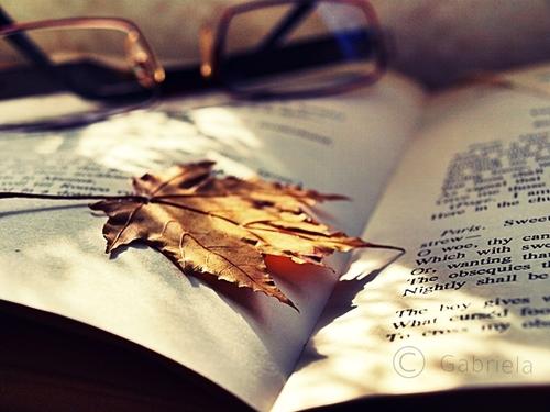 Empieza el otoño. - Página 3 Tumblr_static_picture3