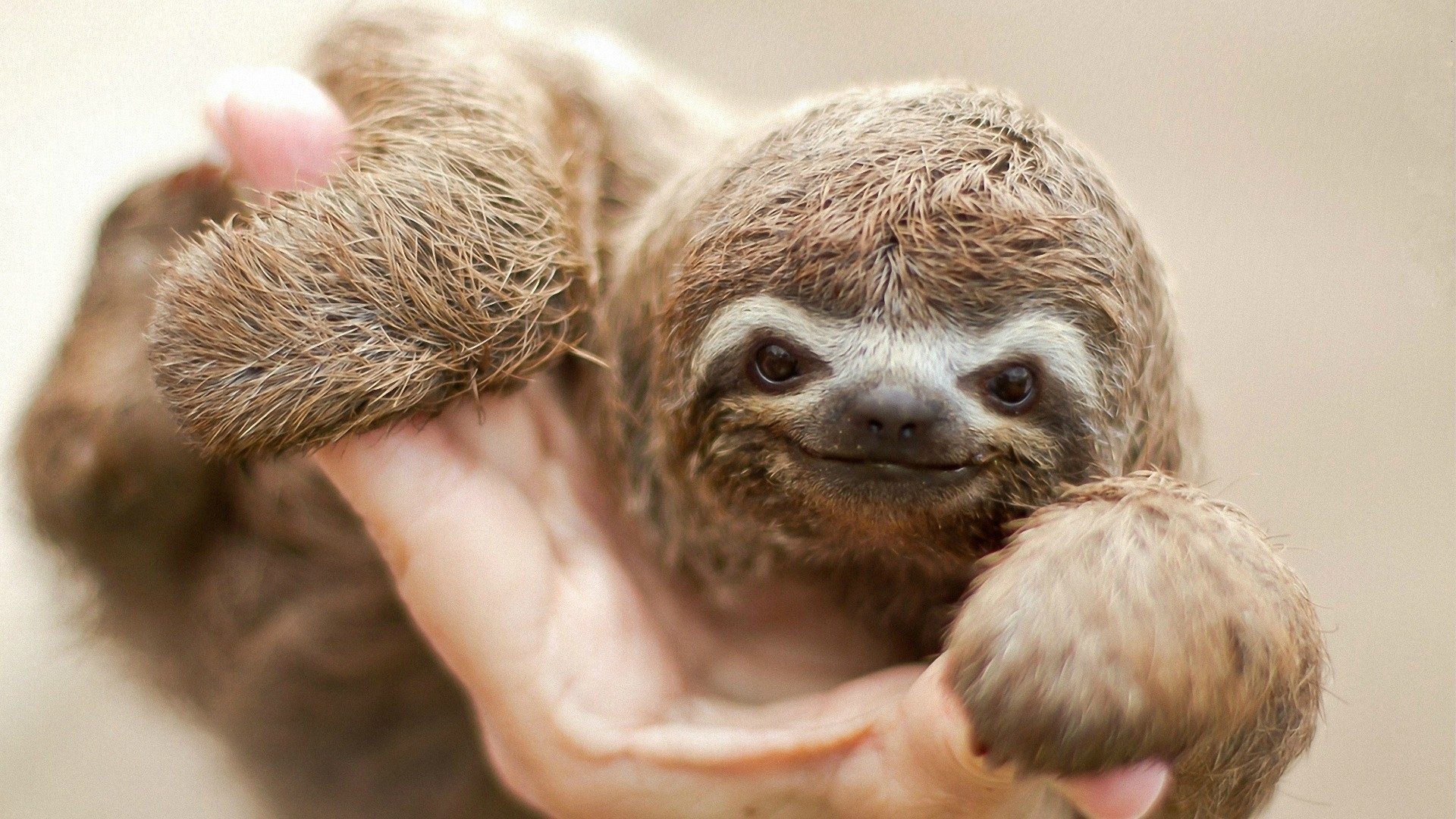 Sloth going to the bathroom - Troylers Pet Sloth Thats Right I Said Sloth