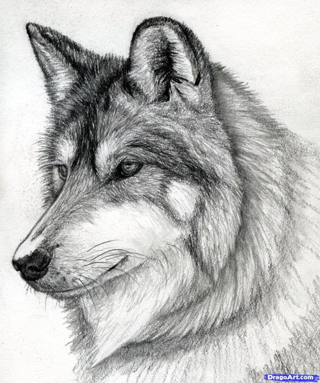 Wolf Head Tumblr