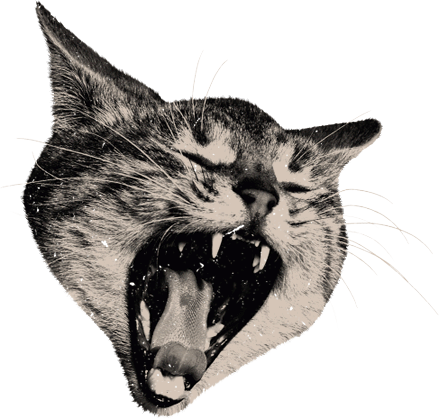 The gallery for --> Cat Head Png