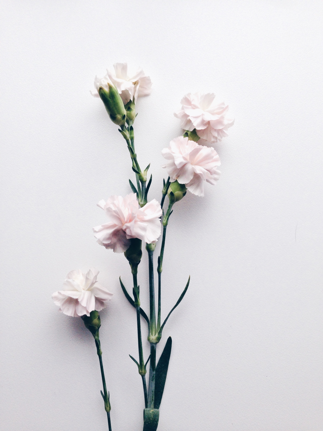 Tumblr White Flowers Choice Image