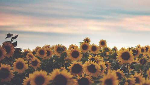 Fotos Para Portada Tumblr