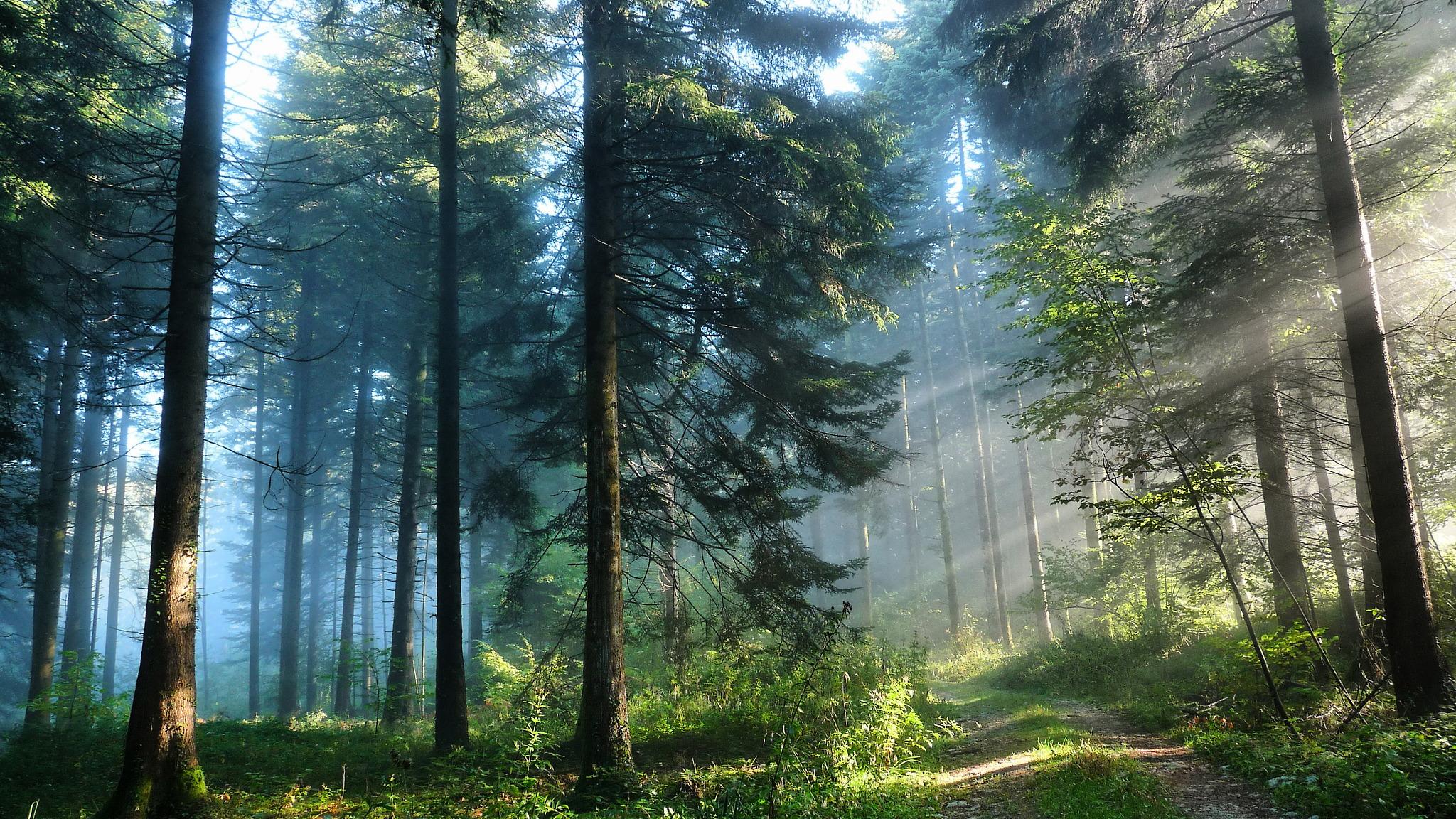 Disperso nei boschi tramonto for Cabina innevata nei boschi