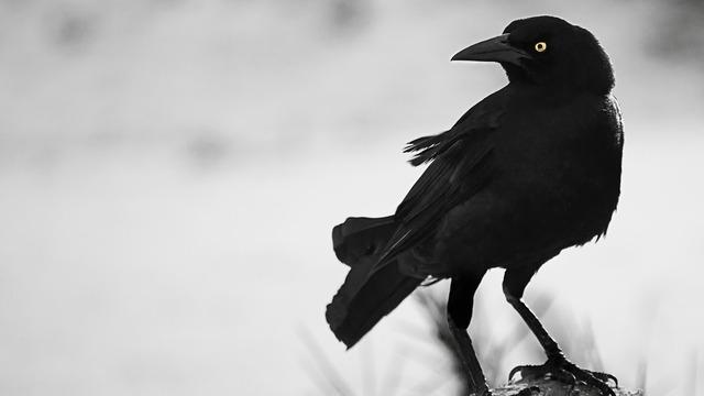 Resultado de imagen de crows tumblr