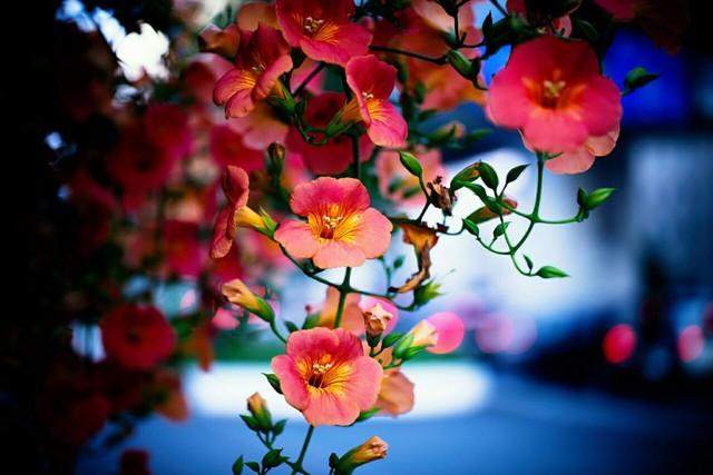 Nature Flowers Tumblr